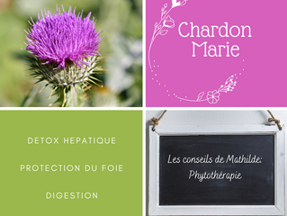 Les conseils de Mathilde: Le Chardon Marie