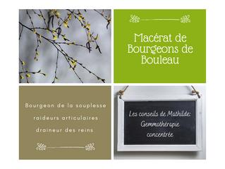 Les conseils de Mathilde: Le macérât concentré de bourgeons de Bouleau