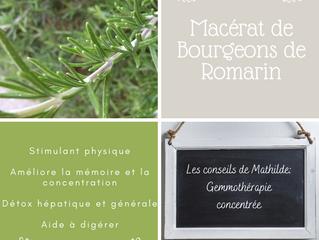 Les conseils de Mathilde: le macérât concentré de bourgeons de Romarin