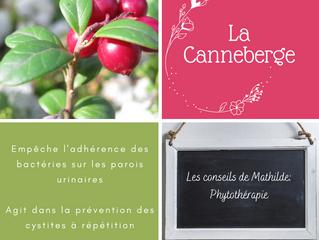 Les conseils de Mathilde: La canneberge