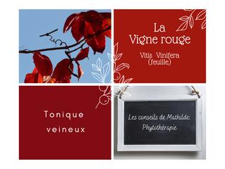 Les conseils de Mathilde: la Vigne Rouge