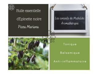 Les conseils de Mathilde: l'huile essentielle d'Epinette noire