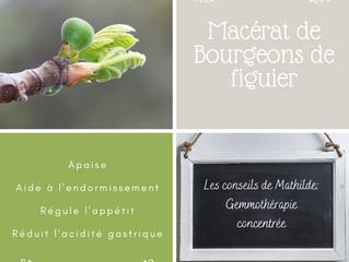 Les conseils de Mathilde: le macérât de bourgeons de figuier