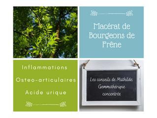 Les conseils de Mathilde: les bourgeons de Frêne