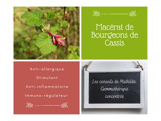 Les conseils de Mathilde: Le macérât concentré de bourgeons de Cassis