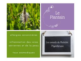 Les conseils de Mathilde: Le Plantain