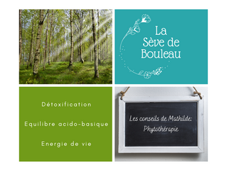 Les conseils de Mathilde: La Sève de Bouleau