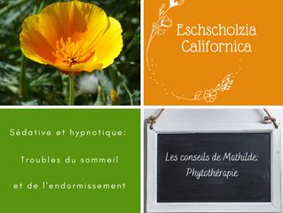 Les conseils de Mathilde: l'Eschscholtzia californica