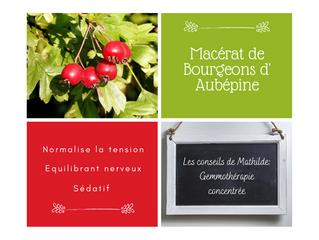 Les conseils de Mathilde: Le macérât concentré de bourgeons d'Aubépine