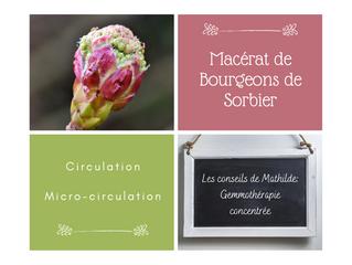Les conseils de Mathilde: le macérât concentré de bourgeons de Sorbier