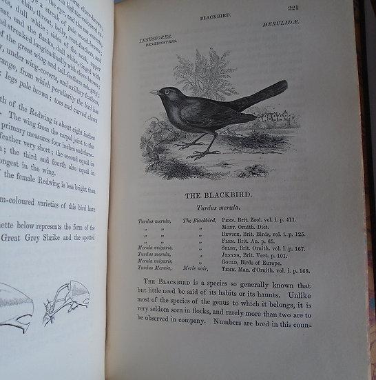 WILLIAM YARRELL BRITISH BIRDS