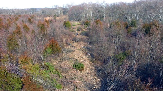 Tackling Invasive Plants