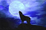 Howl at the Moon night hikes!