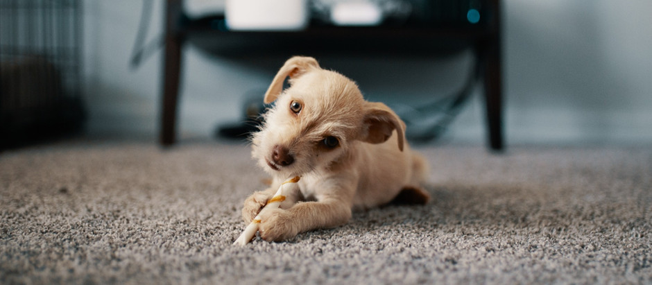 5 Helpful Tips to Make Your Carpets Last Longer