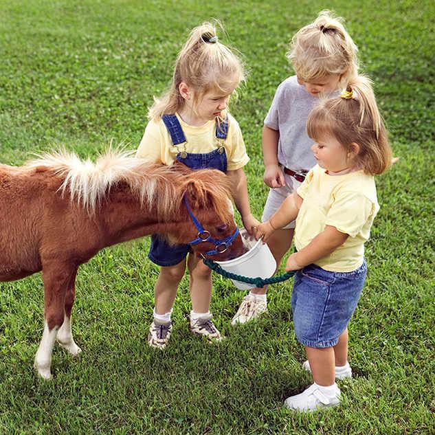 Kinderen met Pony