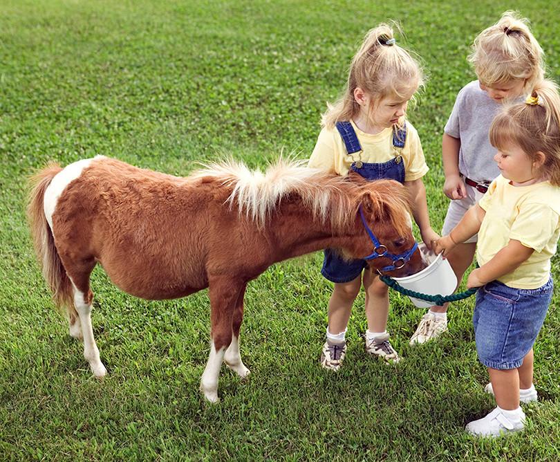 Barn med Pony