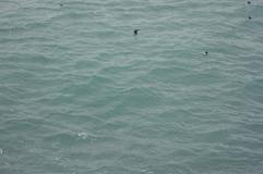2012_Island_ - 521.png