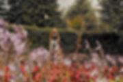 4_high_res.jpg