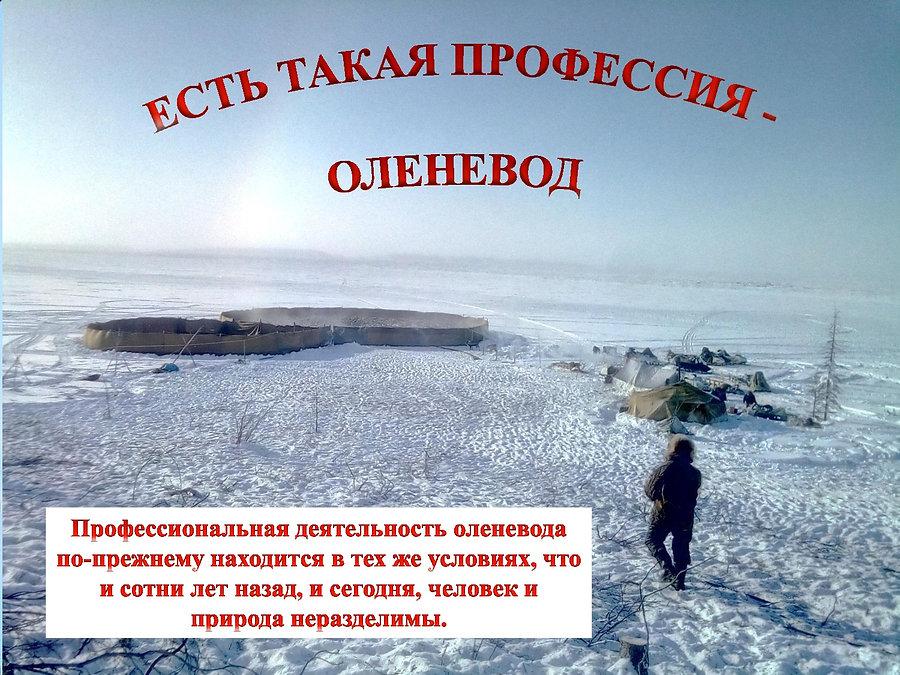 2. ЕСТЬ ТАКАЯ ПРОФЕССИЯ  -  ОЛЕНЕВОД-001