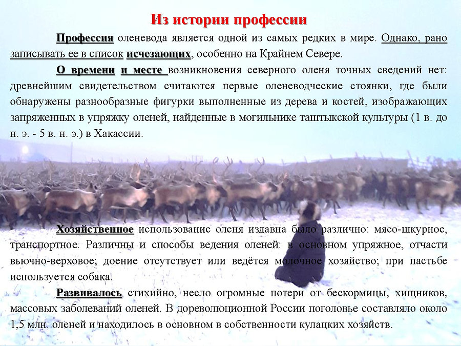 2. ЕСТЬ ТАКАЯ ПРОФЕССИЯ  -  ОЛЕНЕВОД-004