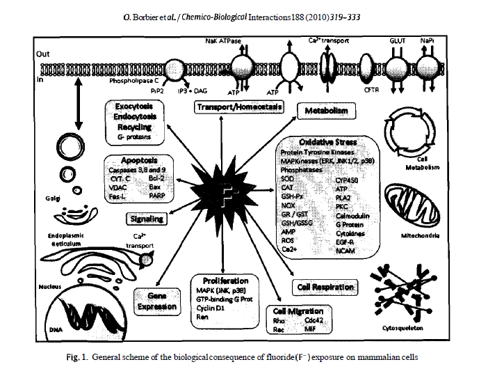 chemical biological effects