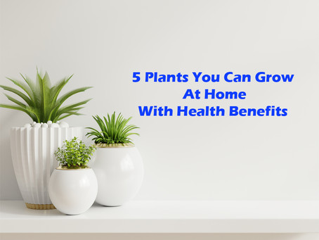 5 Plants You Can Grow Indoor with Health Benefits