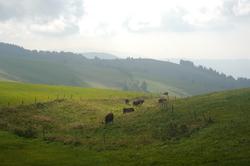 schwarzwald-kuhee