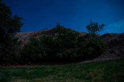 higuera luna llena_