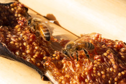 abejas e higos
