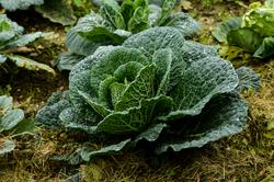 kale-goetheanum