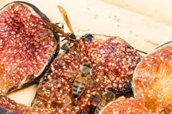avispa abeja