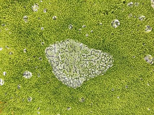 Water on Moss.JPG