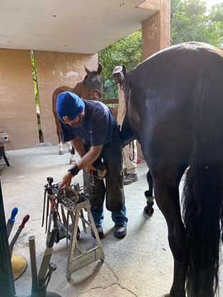 Farrier at work.