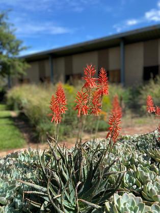 Beautiful indigenous plants.