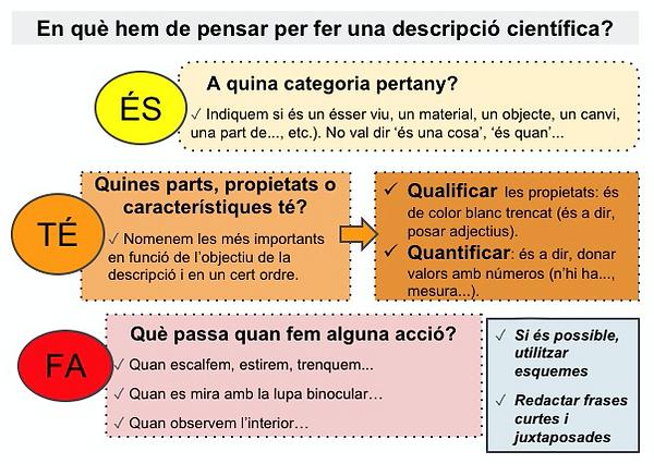 BO_descripcio_científica.png