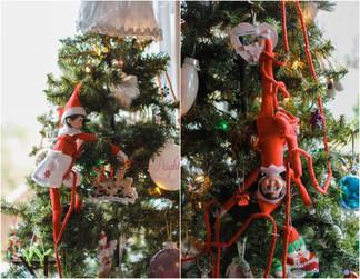 December 1: Tree Climbing