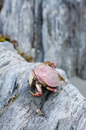 Crab Delight