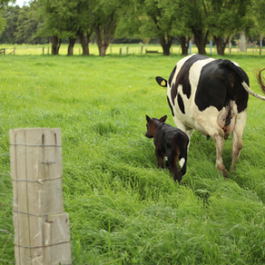 From the soil up: dairy farming with heritage at its core