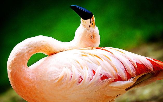 Tim Sitler_Flamingo 7x4.jpg