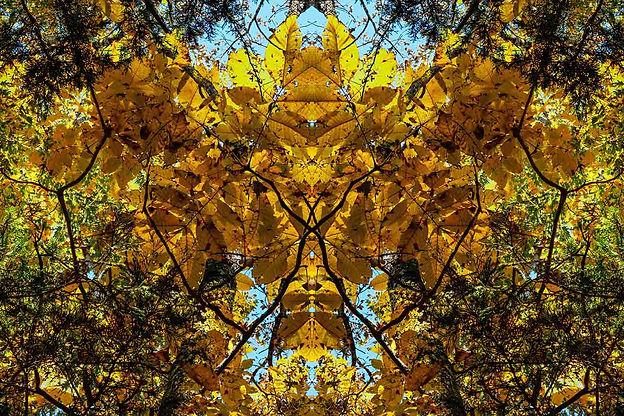 John Keller_Fall Symmetree-.jpg