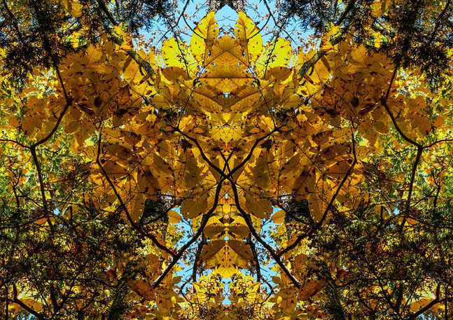 Fall Symmetree | Photography