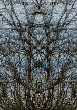 Gothic Symmetree | Photography