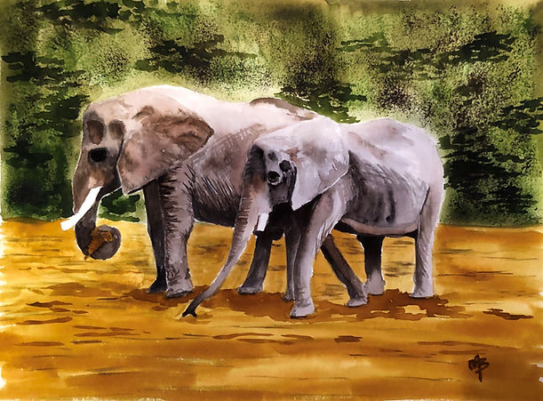 Melissa Brown_elephants.jpeg