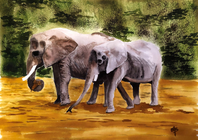 Elephants | Watercolor