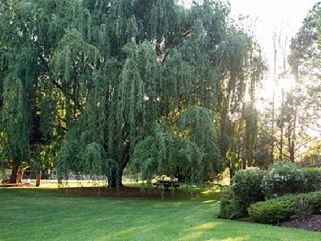 Trees and Turf