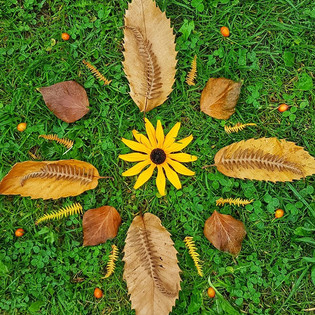 A nature mandala