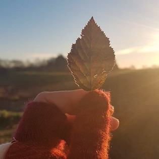 A frozen leaf in my wooly gloved hand