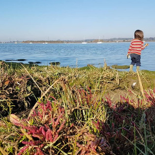 My son watching the swans at the estuary