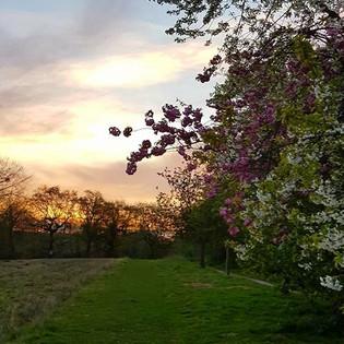 Beautiful blossom lines footpath