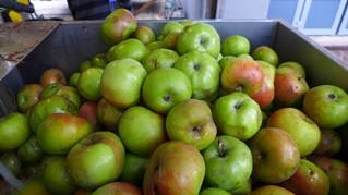 Apfelzeit ist Strudelzeit!
